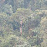 sumatra Foret