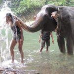 sumatra elephant bain