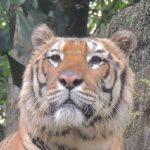 Tiger Archipelago Adventure